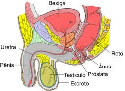 Prostatite Crónica